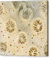 Shell - Conchology - Coral Canvas Print