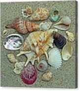 Shell Collection 2 Canvas Print
