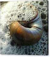 Shell In Sea Foam Canvas Print