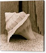 Shell On The Beach Canvas Print