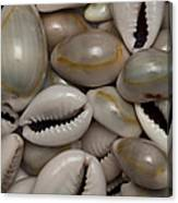 Shell Sigay 1 Canvas Print