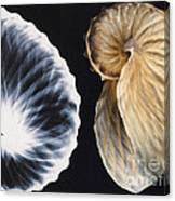 Shell X-ray Canvas Print