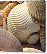 Shells 1 Canvas Print