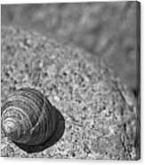 Shells IIi Canvas Print