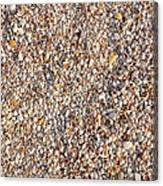 Shells Shells Shells Canvas Print