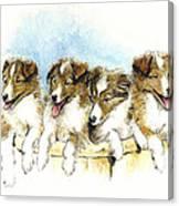 Sheltie Pups Canvas Print