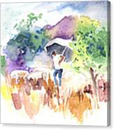 Shepherd In Saint Bertrand De Comminges Canvas Print
