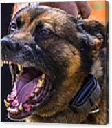 Sheriff K-9 Canvas Print