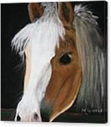 Shetland Pony Canvas Print