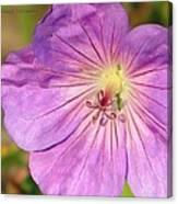 Shimmer Flower Canvas Print