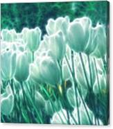 Shimmering Tulips Canvas Print