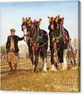 Shire Horses Canvas Print