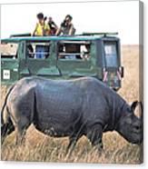 Shooting Rhinos Canvas Print