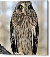 Short-eared Owl Canvas Print