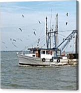 Shrimp Boat And Gulls Canvas Print