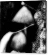 Shroom Magic Canvas Print