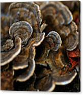 Shrooms Abstracted Canvas Print