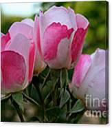 Shrub Roses Canvas Print