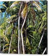 Shy Palms Canvas Print