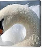 Shy Swan Canvas Print