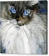 Siamese Gaze By Schulmanart Canvas Print