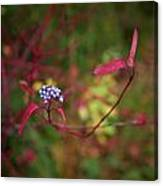 Siberian Dogwood Canvas Print