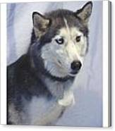 Siberian Husky 182 Canvas Print