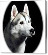Siberian Husky 271 Canvas Print