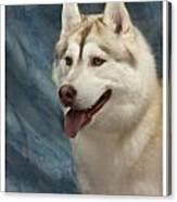 Siberian Husky 954 Canvas Print
