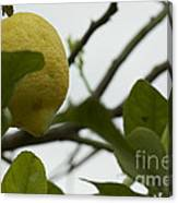 Sicilian's Lemonade Canvas Print