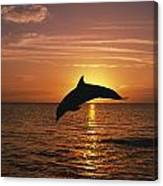 Silhouette Of Leaping Bottlenose Canvas Print