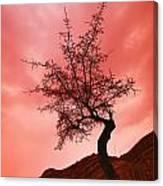 Silhouette Of Shrub Tree Canvas Print