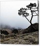 Silhouette Of Tree In Mist Canvas Print