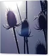 Silhouette Of Weeds Canvas Print