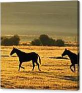 Silhouetted Horses Running Canvas Print