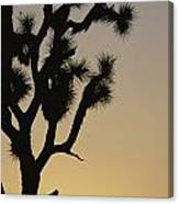 Silhouetted Joshua Tree In Antelope Canvas Print