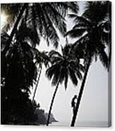 Silhouetted Man Climbing A Palm Tree To Canvas Print