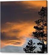 Silhouetted Tree At Sunset Canvas Print