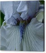 Silky Iris Canvas Print