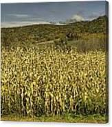 Silo Panorama Canvas Print