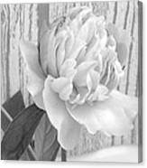 Silver Beauty Canvas Print