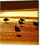 Silver Gulls On Golden Beach Canvas Print