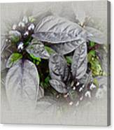 Silver Leaves And Berries Canvas Print