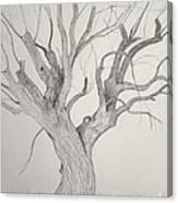 Silver Maple Canvas Print