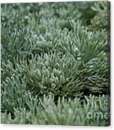 Silver Mound Dew Drenched Canvas Print