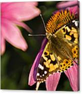 Simple Butterfly Canvas Print