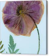 Simply Poppy  Canvas Print