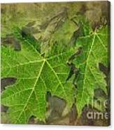Simply Summer Maple Leaves Canvas Print