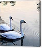Sing Of White Swan Canvas Print