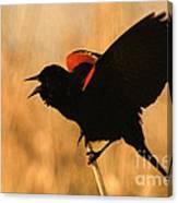 Singing At Sunset Canvas Print
